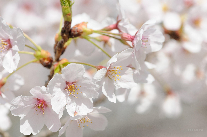 春の塗り替えキャンペーン